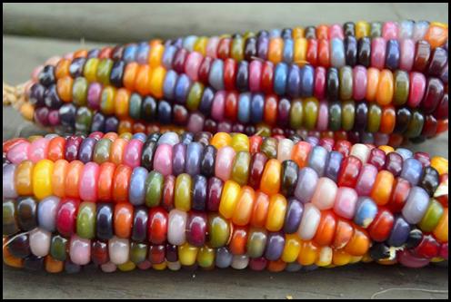 maíz3.png